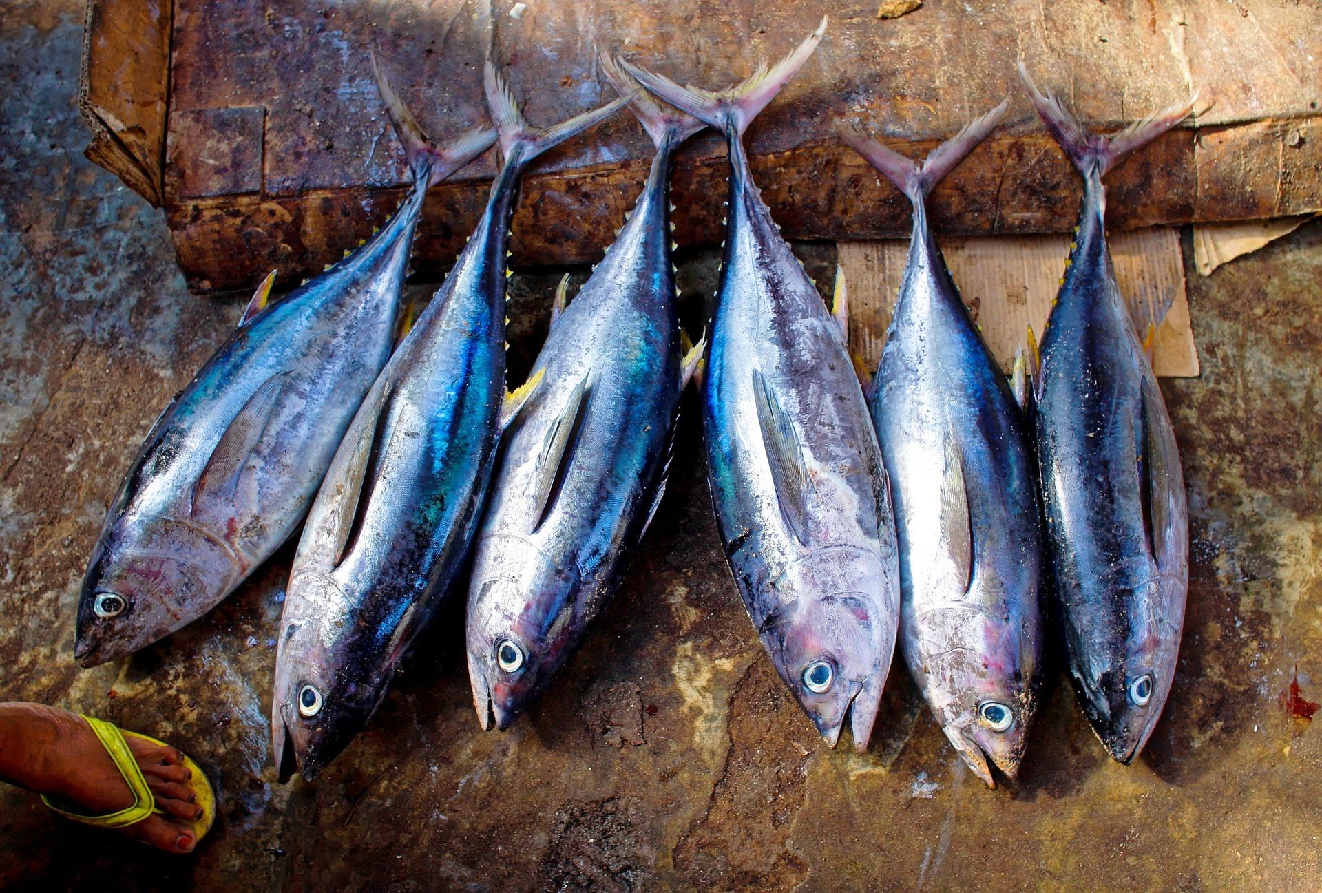 pesce alimentazione cane