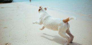 Vacanze nelle Marche con il cane