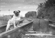 Cani in treno