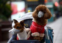 Coronavirus nel cane - Quali sono i rischi