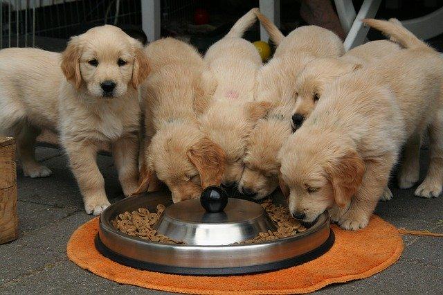 crocchette per cani buone e economiche