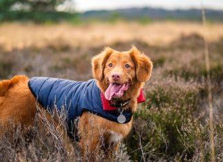 Migliori GPS per cani