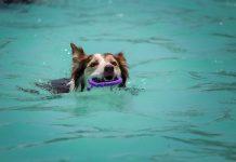 scegliere piscina per cani