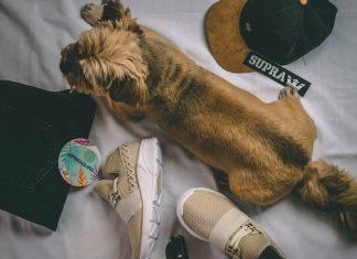 Abbigliamento per cani come scegliere