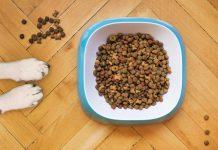Migliori crocchette per cani italiane